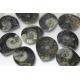 Ammonitter, små